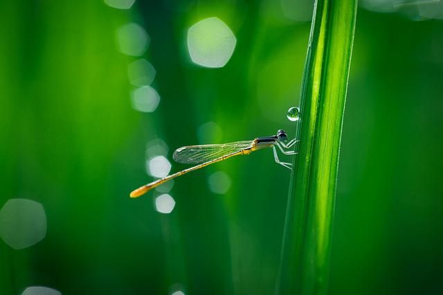 Bokeh, Close-up, Color, Dew, Dragonfly, Droplet