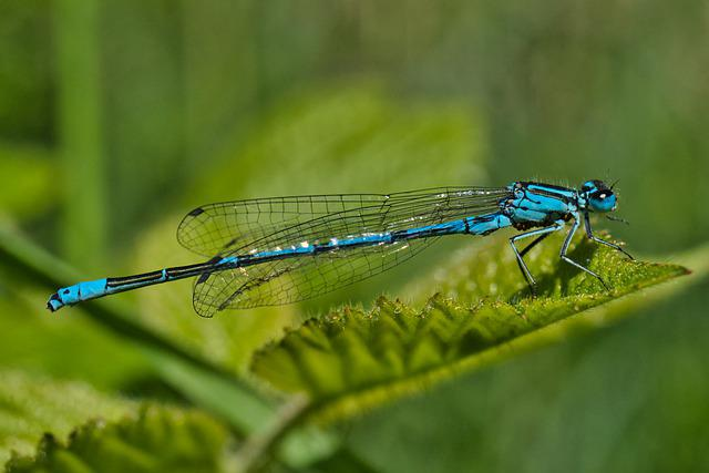 Dragonfly, Macro, Close Up, Flight Insect, Biotope