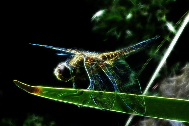 Fractalius, Four-spotted Dragonfly, Dragonfly