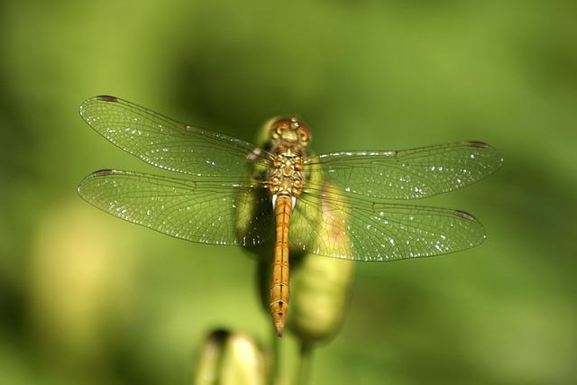 Dragonfly, Jo Boonstra, Groningen