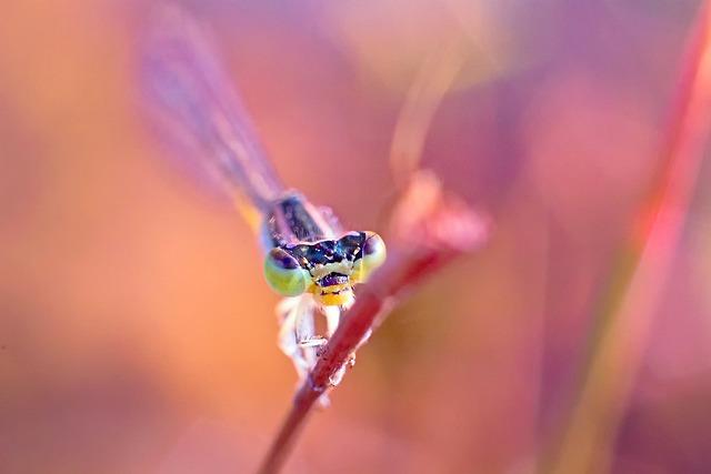 Dragonfly, Damselfy, Kerala, India