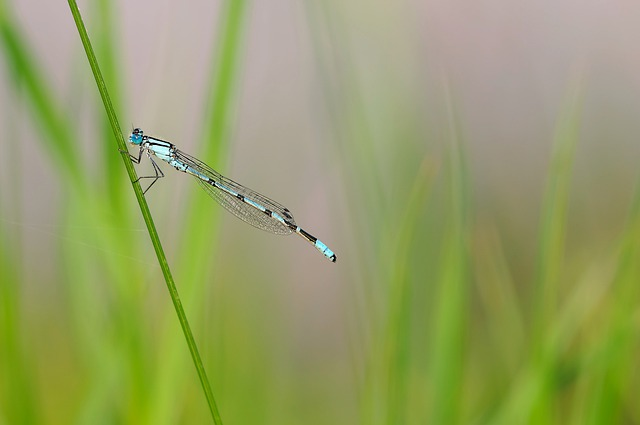 Insect, Dragonfly, Nature