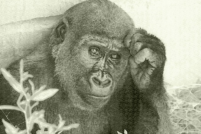 Drawing, Gorilla, Look, Animal, Muzzle, Nature, Face
