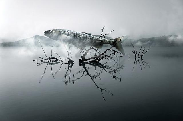 Fish, River, Wood, Cloud, Surreal, Dream, Structure
