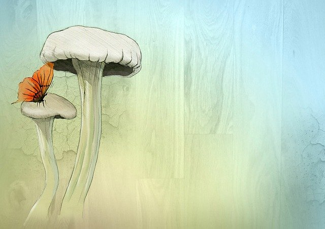 Fairy, Toadstool, Watercolor, Butterfly, Dreamy, Design
