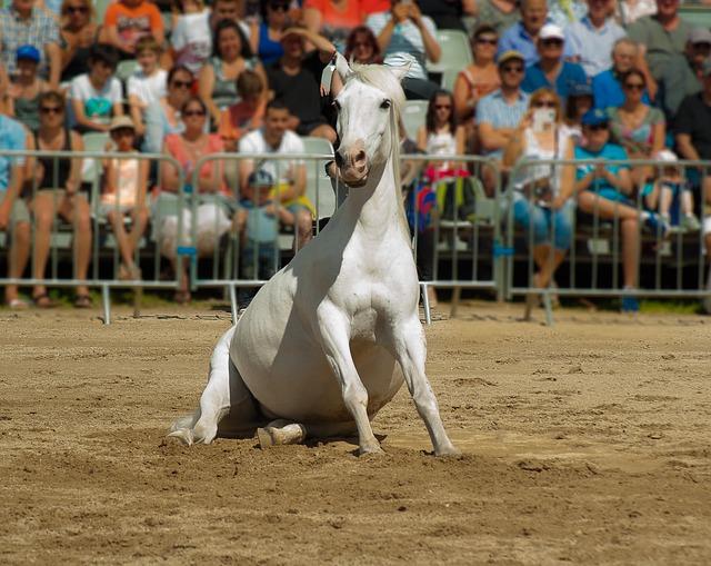 Horse, Horse Show, Dressage, Horseback Riding