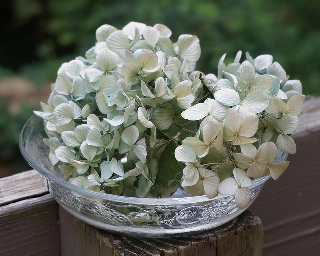 Dried Hydrangeas In Glass Bowl, Dried Hydrangea Flowers