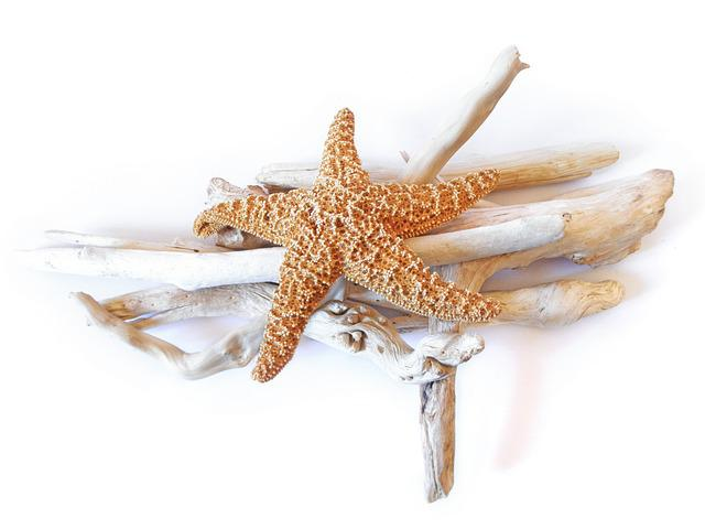Starfish, Dried, Driftwood, Decorative, Marine