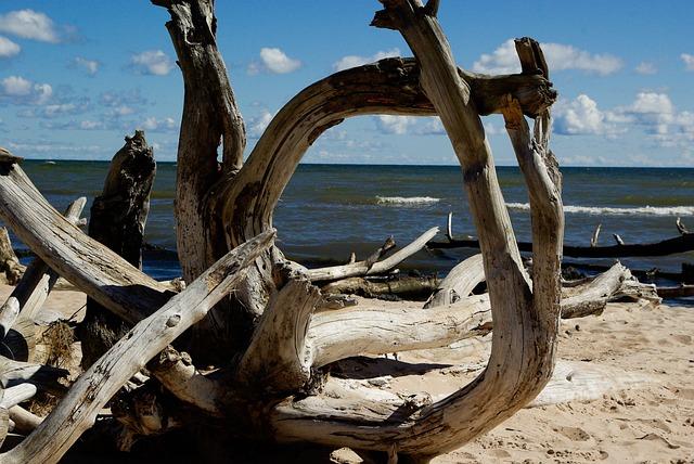 Baltic Sea, Beach, Driftwood, Dead Tree, Branch