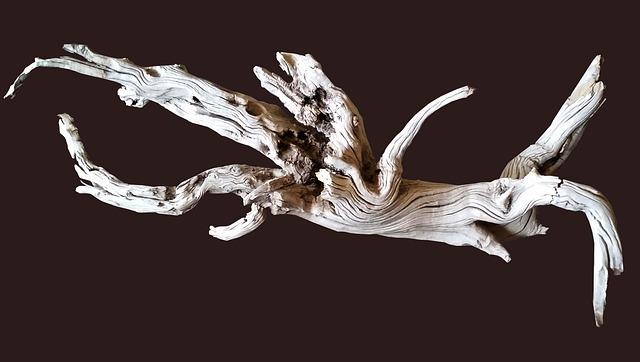 Driftwood, Shape, Texture
