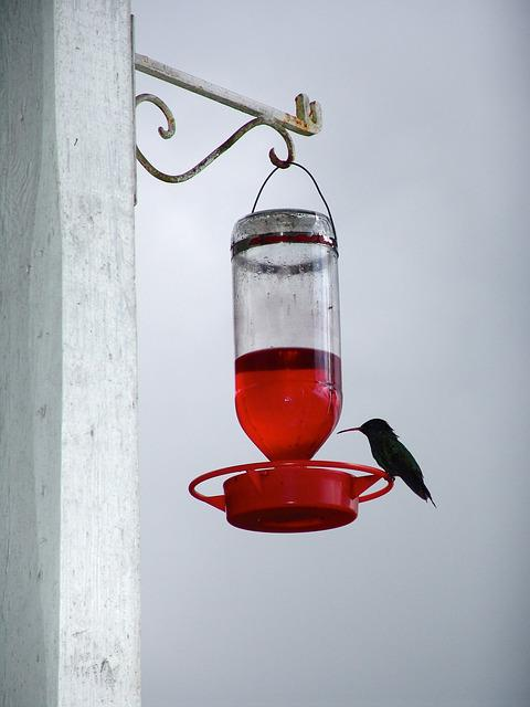 Hummingbird, Drink, Bird, Flower Nectar, Bill