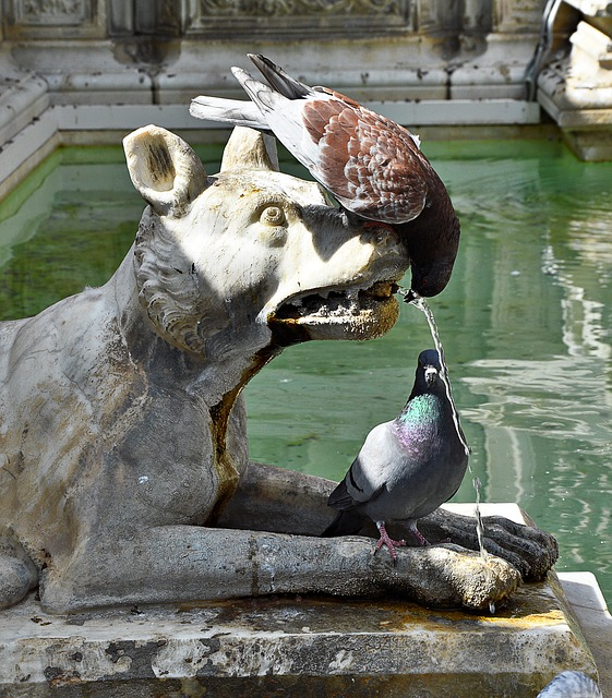 Pigeons, Drink, Fountain, Out
