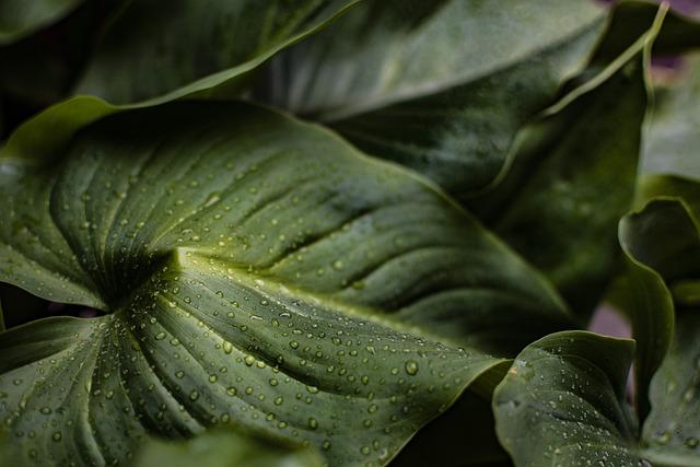 Leaves, Drops Of Rain, Nature, Drip