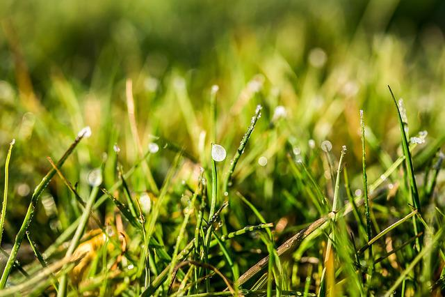 Eistropfen, Frozen Dew Drops, Drip, Dewdrop, Wet