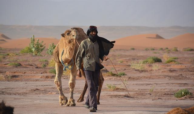Bedouin, Dromedary, Sand