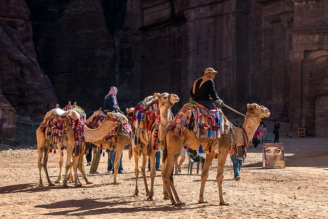 Jordan, Petra, Camel, Dromedary, Desert
