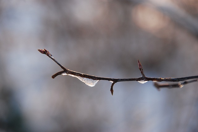 Nature, Winter, Ice, Freeze, Cold, Branch, Drop, Water
