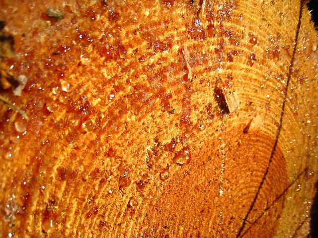Log, Resin, Drop Of Resin, Warm Wood, Annual Rings