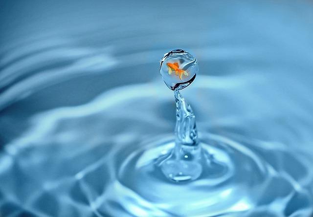 Drop Of Water, Goldfish, Fish, Water, Swim, Drip