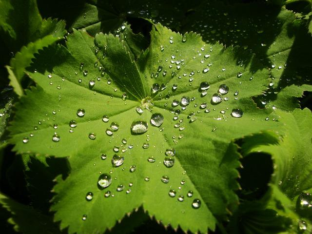 Drop Of Water, Leaf, Makkro