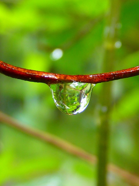 Drop Of Water, Drip, Close, Green, Nature