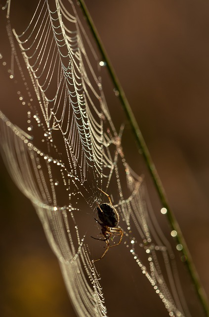 Spider, Network, Insect, Nature, Drop Of Water