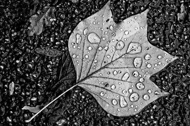 Leaf, Water, Drops, Water Drops, Droplets On Leaf