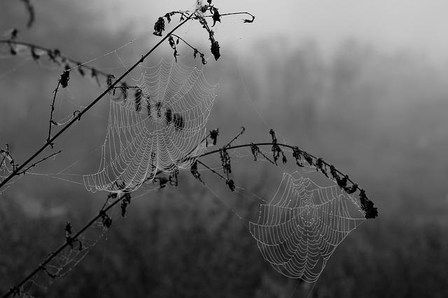 Spider Web, Drops, Dew, Place, Nature