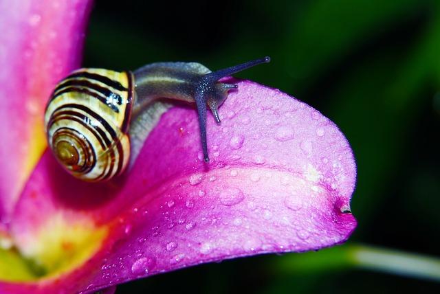 Wstężyk Huntsman, Molluscum, Flower, Lily, Drops, Rain