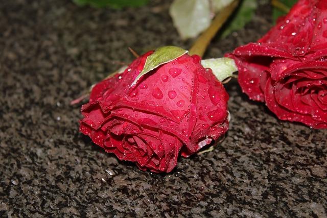 Rose, Flower, Rain, Drops, Rose Petals, Red Rose