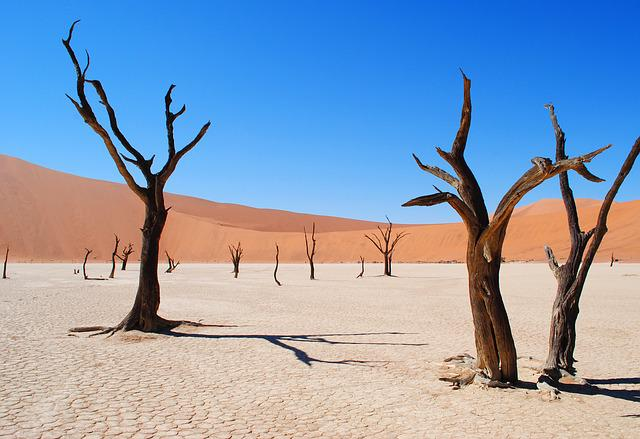 Deadvlei, Namibia, Africa, Desert, Drought, Tree