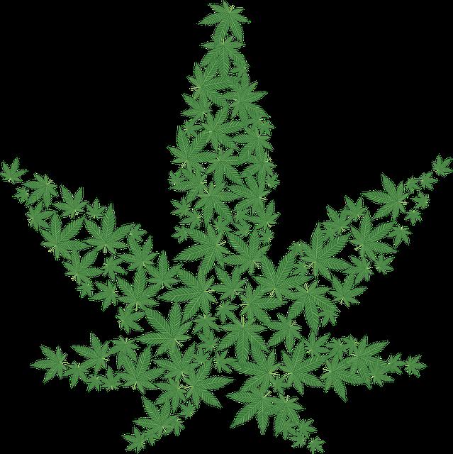 Cannabis, Drug, Forbidden, Hemp, Illegal, Leaf