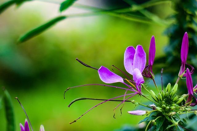 Drunk Butterfly, Nature, Purple, Plant, Flower, Leaf