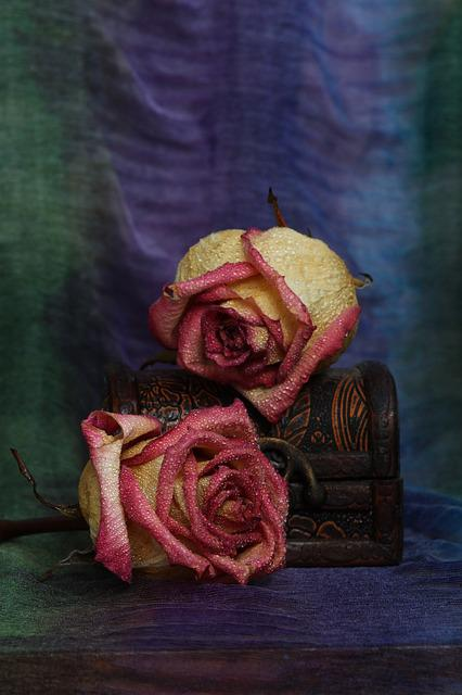 Rose, Jewelry Box, Flower, Dry