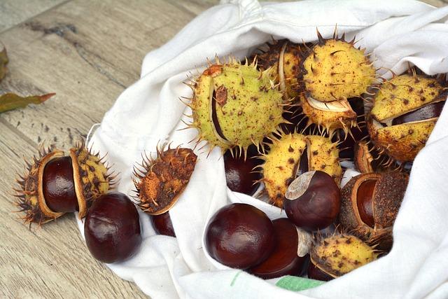 Chestnuts, Autumn, Horse Chestnut, Fruit, Dry Leaves