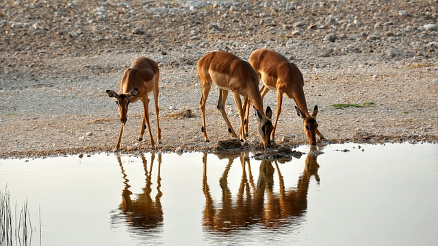 Africa, Namibia, Nature, Dry, National Park, Animal