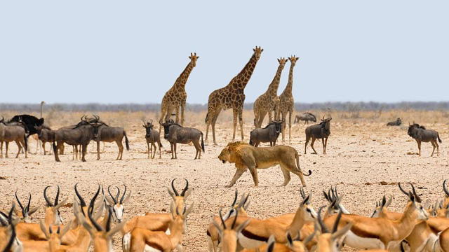 Africa, Namibia, Nature, Dry, National Park, Water Hole