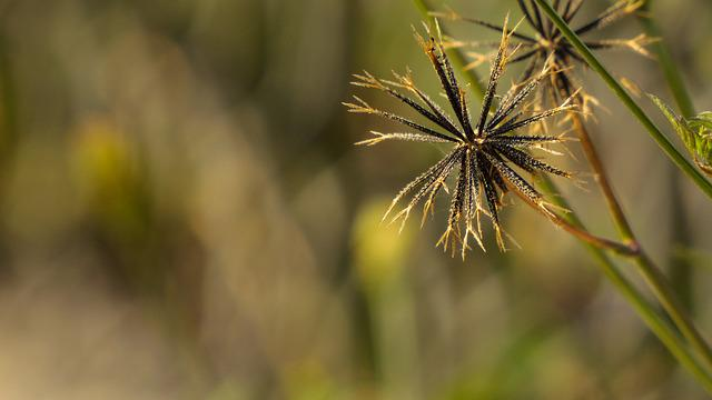 Flora, Natura, Beauty, Nature, Grass, Dry, Plant