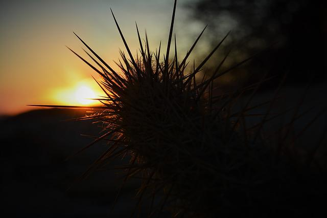 Northeast, Dry, Sunset, Brazil