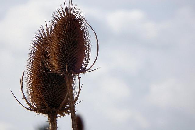 Nature, Plant, Dry