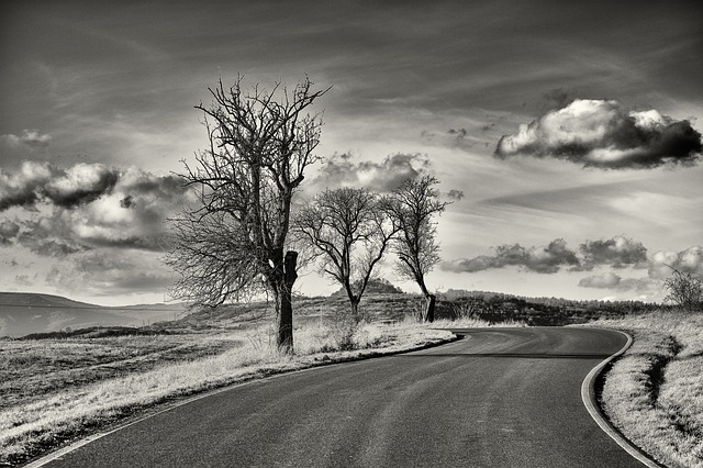 Tree, Landscape, Path, Road, Heaven, Dry Tree, Nature