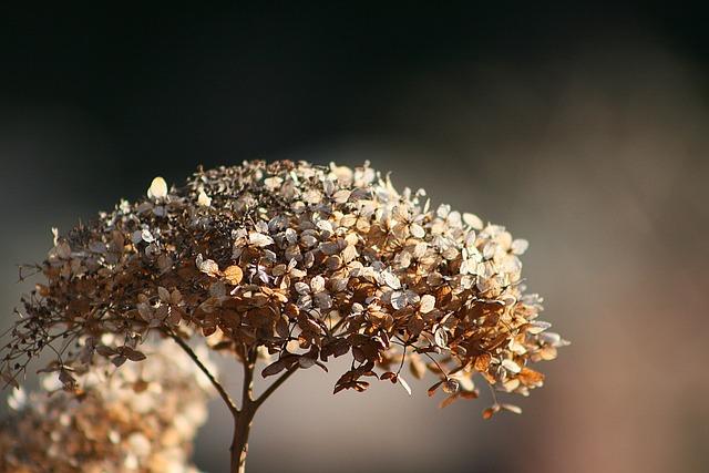 Nature, Flower, Plant, Dry, Winter