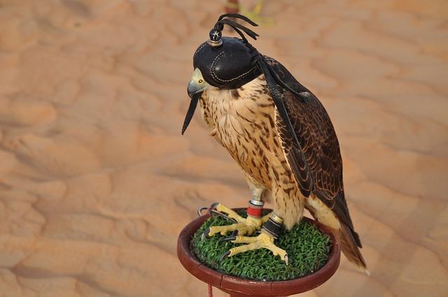 Dubai, Falcon, Desert