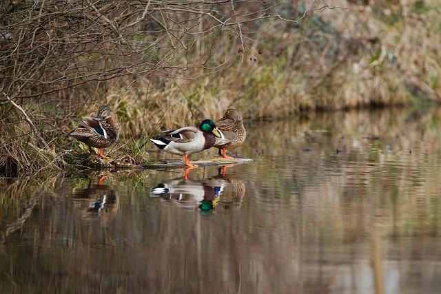 Bird, Nature, Waters, Lake, Animal World, Duck, River
