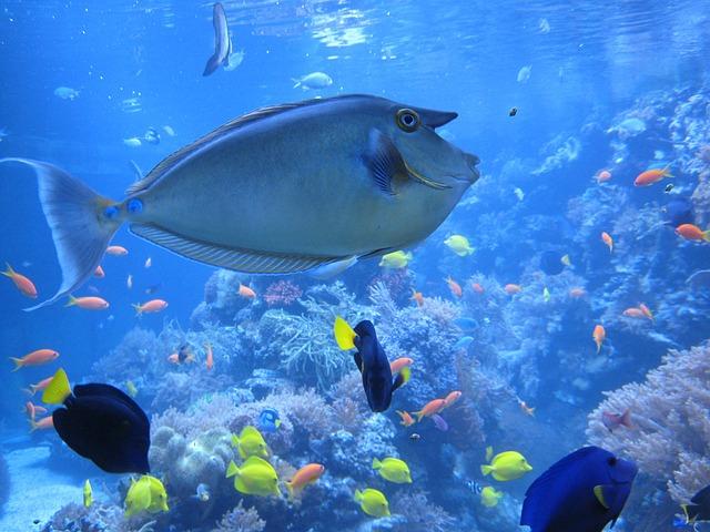 Nose Doctor Fish, Fish, Aquarium, Zoo, Duisburg
