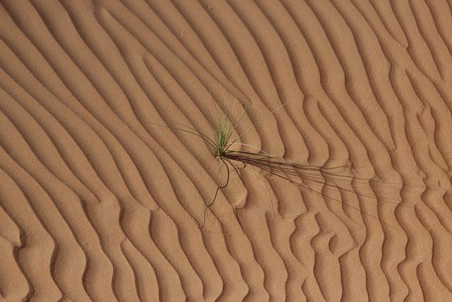 Desert, Oman, Sand, Dunes, Arid