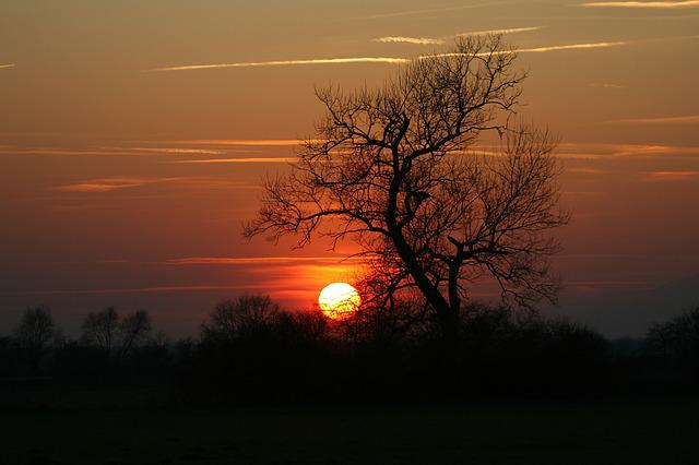 Sunset, Tree, Abendstimmung, Twilight, Sun, Dusk