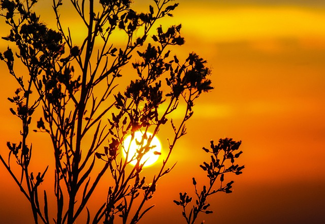 Sunset, Sky, Glow, Orange, Dusk, Twilight, Tree