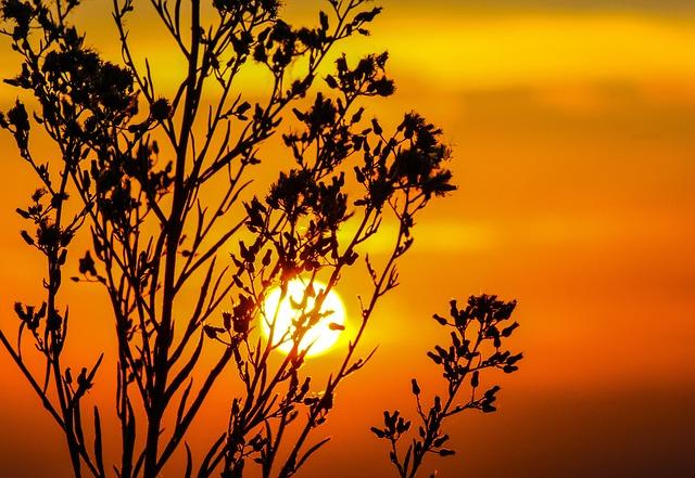 Sunset, Sky, Glow, Orange, Dusk, Twilight, Tree