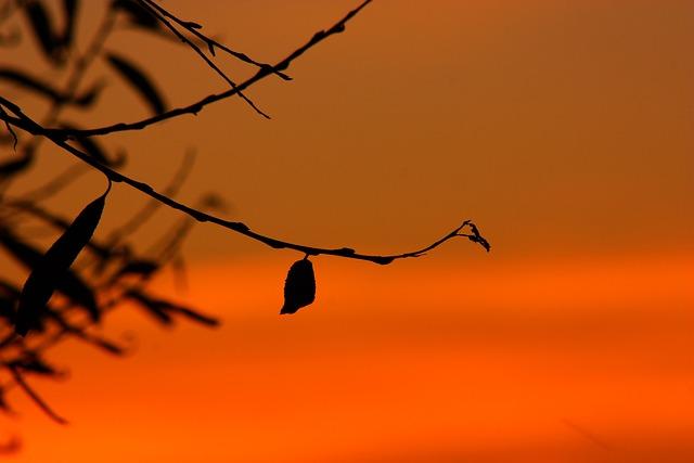 Silhouette, Lights, Sunrise, Evening, Dusk, Gold